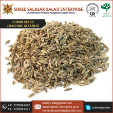 Machine Cleaned Cumin Seeds at Wholesale Price