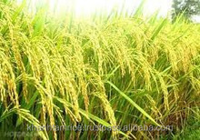 PRICE PER TON OF RICE FROM VIETNAM RICE FACTORY_Ms.Jenny 84 902 463 502