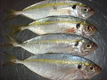 Frozen Yellow Stripe trevally fish