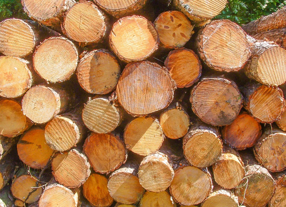 PINE SPRUCE BIRCH OAK ASH LOGS/TIMBER AVAILABLE