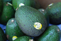 Hass Avocados at cheap price