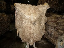 WET SALTED SHEEP SKINS