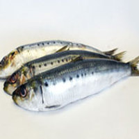 New Wholesale Seafood Price Of Fresh