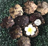 Coconut Shell Soap Dish, Coconut Shell Candle Holder Flower shape and Animal shape.