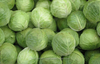 indian fresh cabbage supplier/vegetable exporter in india