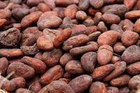 Top quality cocoa beans