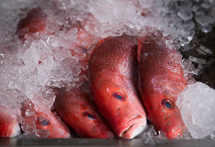 Frozen Northern Red Snapper