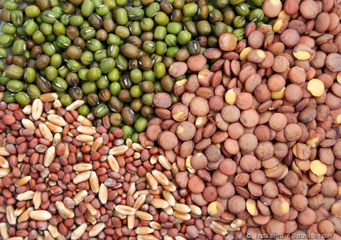 vegetable seeds for sale