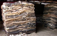 Natural Donkey Hide, Dry and Wet Salted Donkey/Wet Salted Cow Hides