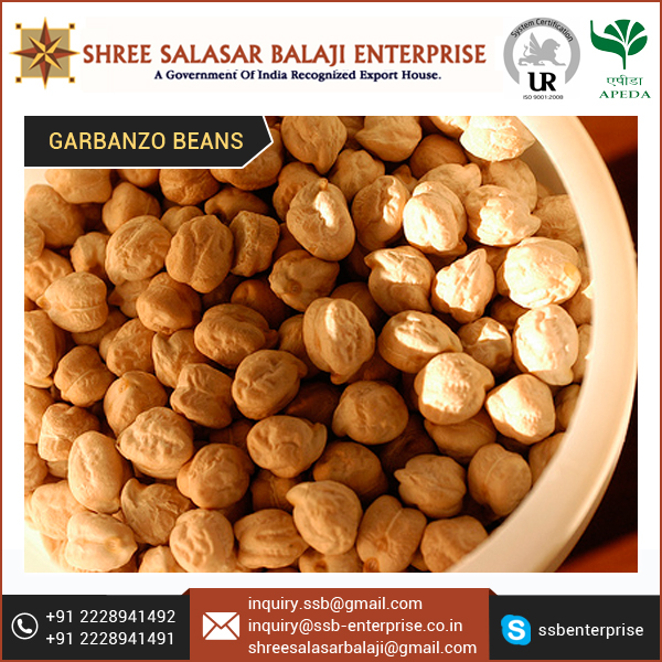 Organic Kabuli Chickpeas 12mm for Wholesale Buyer