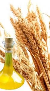 OBM Pure and Natural Wheatgerm Oil with high quality
