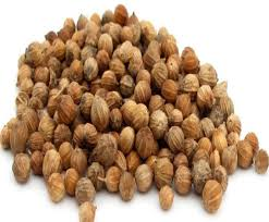 Dried Coriander Seed