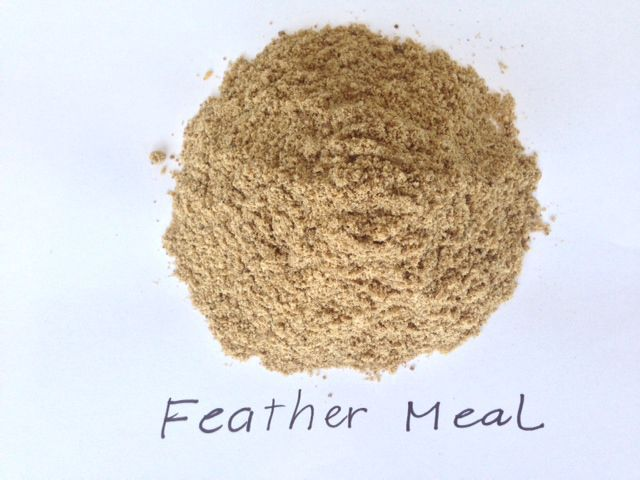 Best Feather Meal for Animals