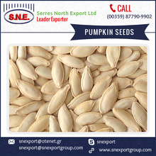 Hot Sale of Cleaned Roasted Pumpkin Seed at Possible Lowest Price