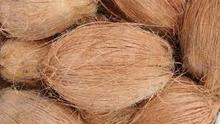 Fresh Indian Semi Husked Coconut
