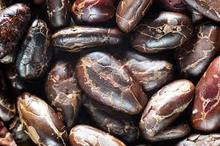 Roasted Foresto Cocoa Beans