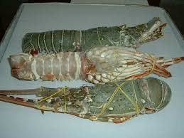 hot sale high quality price frozen lobster