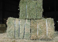 high quality Animal feed , alfalfa hay for sale