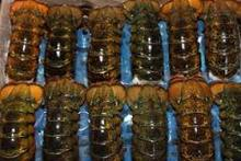 Grade A Frozen Sea Food Surimi Lobsters,Green Lobsters,Lobsters Tail and Slipper Lobsters for sale