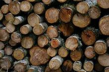European white Ash Logs Available with discount