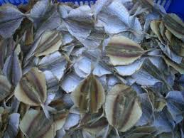 DRIED YELLOW STRIPE TREVALLY 80% WGT