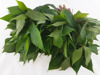 High Quality Cassava Leaf