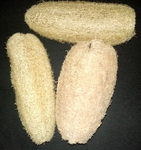 Egyptian Loofah