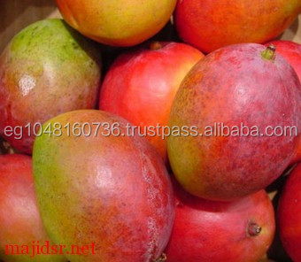 Fresh Style and Mango Type best quality and price