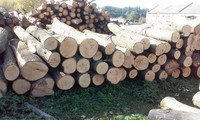 BASSWOOD/LIME/LINDEN LOGS FROM UKRAINE (Tilia cordata)