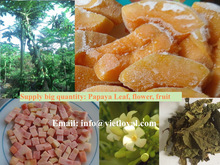 PAPAYA LEAF / PAPAYA FLOWER / FRESH FROZEN FRUIT