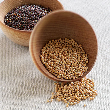 Best Grade Yellow and White Mustard Seeds