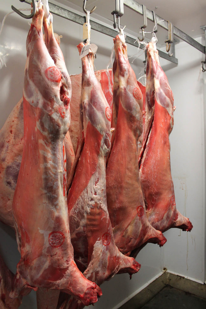 Cheap price fresh goat meat