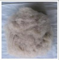 Light grey chinese cashmere fibre with good prices