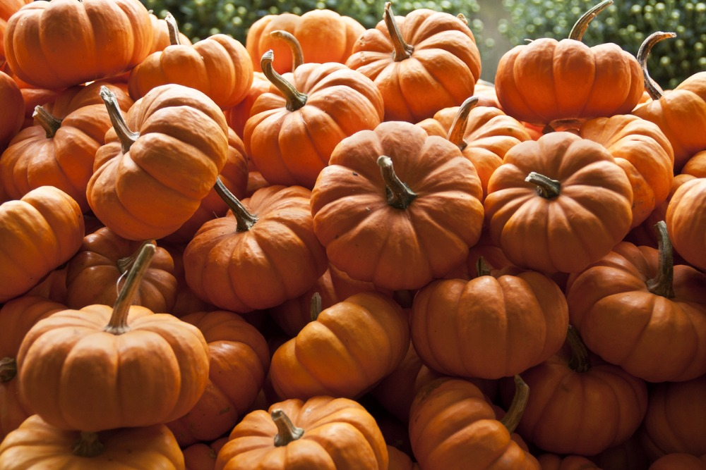 THAILAND PUMPKINS WITH THE BEST PRICE