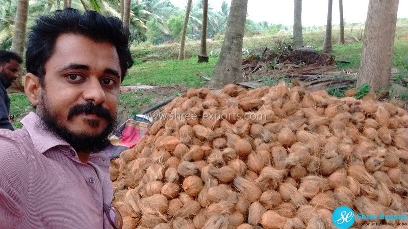 High quality coconuts from South Indian farm Managing by youngsters