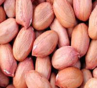 Quality Raw Peanuts Kernel / Raw Peanut in Shell for sale