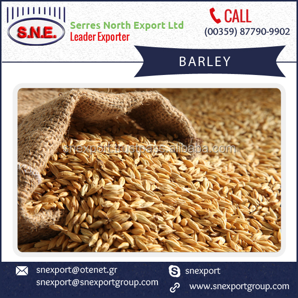 Buy Premium Quality Animal Feed Barley from Trader at Modest Discount