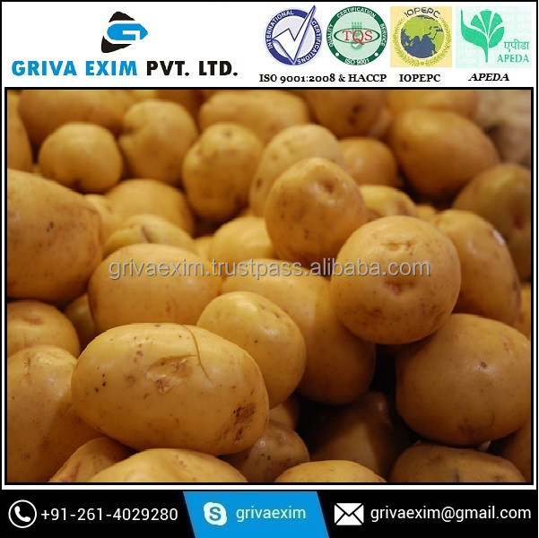 spring potato for big size which is best for french fries