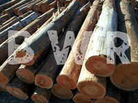 *** EUCALYPTUS WOOD LOGS ***