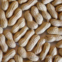 Groundnut with Shell, peanut with Shell, Raw shelled peanuts for sale