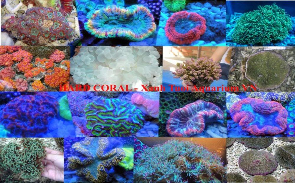 Poissons d 39 eau sal e an mone poissons d 39 eau douce pour for Live saltwater fish for sale