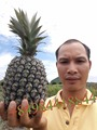 vietnamse fresh PINEAPPLE / +84963818434 whatsapp
