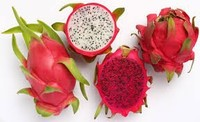 100% Natural Fresh Dragon Fruit from Vietnam