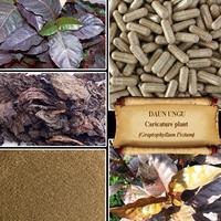 [ORGANIC] CARICATURE PLANT / Handeuleum / Graptophyllum Pictum / DAUN UNGU / Fresh Powder, Extract, Capsules, Liquid, Oil