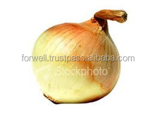 all kinds of onions with high quality
