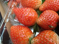 sale fresh strawberry, Egyptian strawberry