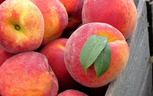 FRESH PEACH / NECTARINE