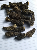 Dried Wild Morchella Mushrooms/Dried Morels/Guchhi/Morchella Esculenta