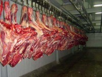 HALAL FROZEN / FROZEN GOAT / LAMB / SHEEP MEAT / CARCASS