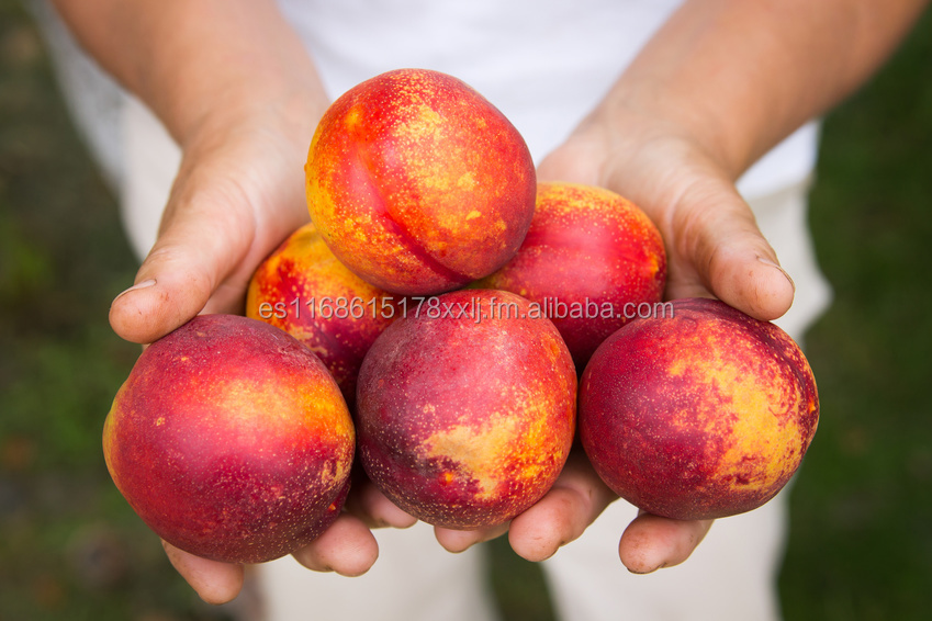 Fresh Stone Fruits